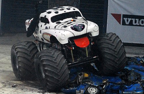 Dalmatian Monster Mutt